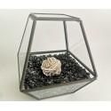 terariu - telepatie terariu cristale terariu - telepatie cu cristale energetice | terariu comunicare telepatica 4