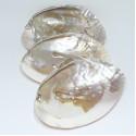 cochilie scoica alba cu perle naturale 16 cm purificare chakre cochilie scoica alba cu perle naturale 16 cm 3