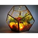 a magic home terariu cristale energetice 7 chakre terariu magic home pentru protectia casei 5