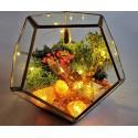 a magic home terariu cristale energetice 7 chakre terariu magic home pentru protectia casei 7